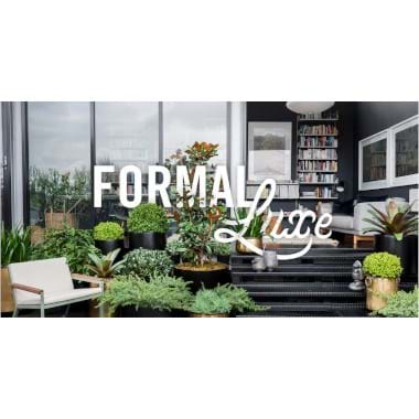 A Formal Luxe | Plant Packages