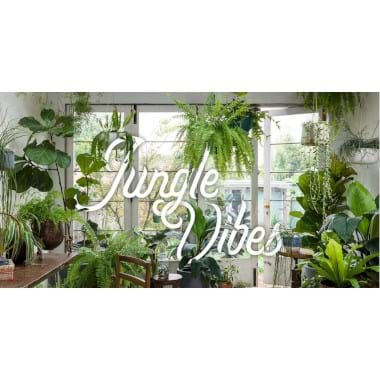 A Jungle Vibes | Plant Packages